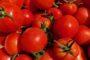 Tomaten-Hochsaison: Urlaub auf dem Teller
